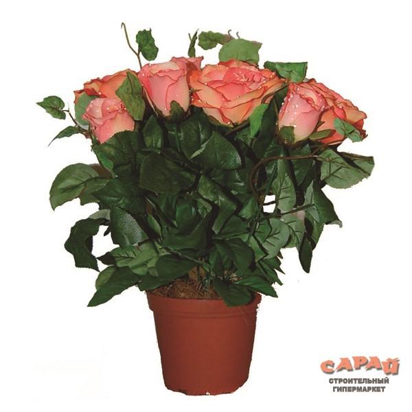 Купить цветы в горшках ульяновск купить выносливые домашние цветы